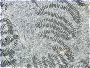 track-fosil-1.jpg