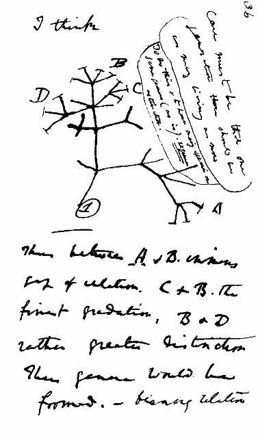 Gambar pohon evolusi pertama dari Darwin